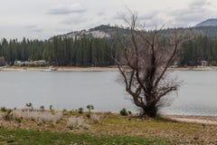 Bass Lake y árbol Imagen de archivo