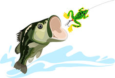 Bass and lure. Predatory fish, big fishing, silicone bait, vector illustration Stock Photography