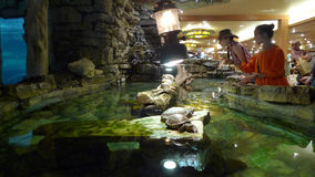 Bass Pro Shops, Springfield, MO turtle display Stock Photo