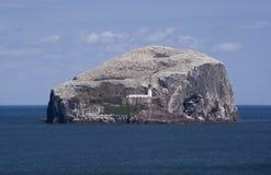 Bass Rock. The island of Bass Rock in East Lothian, Scotland stock photos