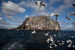 Bass Rock Royalty Free Stock Photos