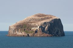 Bass Rock. The island of Bass Rock in East Lothian, Scotland - covered in gannets royalty free stock photos