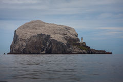 Bass Rock 37642993 Arkivfoton