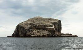 Bass Rock et les fous de Bassan du nord Image stock