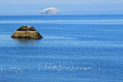 Bass Rock, Firth of Forth,  from Dunbar Royalty Free Stock Photos