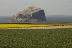 Bass Rock i Skottland med fält i förgrund arkivfoto