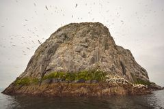 Bass rock. Jurassic gannet Scotland Royalty Free Stock Photography