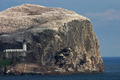Bass Rock, Scotland. A close image of Bass Rock, near North Berwick, in the Firth of Forth, Scotland, with the lighthouse on the side of the cliff face, and Stock Images