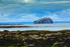 Bass Rock, Scotland. A close image of Bass Rock, near North Berwick, in the Firth of Forth, Scotland, with the lighthouse on the side of the cliff face, and royalty free stock image