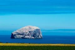 Bass rock scotland united kingdom europe. Bass rock island of the seabirds scotland united kingdom europe stock photography