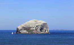 Bass rock seabird colony scotland Stock Image