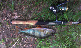 Bass-- und spinnendes Fischen Stockfotos