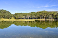 Bassa de oles reflection Royalty Free Stock Image