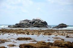 Bassa marea Fotografie Stock