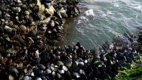 Bassa marea al pomeriggio stock video footage