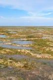 Bassa marea alla spiaggia Bali di Sanur Fotografie Stock Libere da Diritti