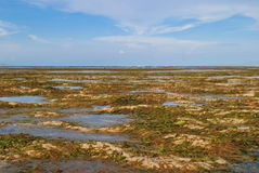 Bassa marea alla spiaggia Bali di Sanur Fotografia Stock