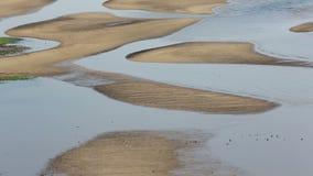 Bassa marea con il paesaggio dell'uccello stock footage