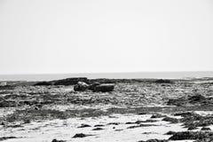 Bassa marea nel Nord della Francia nel nero e nella bianco-bellezza di fre Fotografia Stock Libera da Diritti