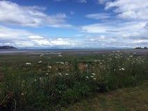 Bassa marea, Royston Seaside Trail, Royston, BC Fotografia Stock