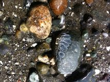 Bassa marea - spiaggia rocciosa 1 fotografie stock libere da diritti