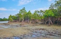 Bassa marea sulla baia del Bengala, Ngwesaung, Myanmar fotografie stock libere da diritti