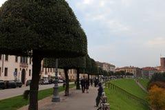 Bassano del Grappa, VI, Italië - Oktober 18, 2015: Bomen in a Stock Foto