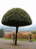 Bassano del Grappa, VI, Italië - Oktober 18, 2015: boom in av Stock Foto's