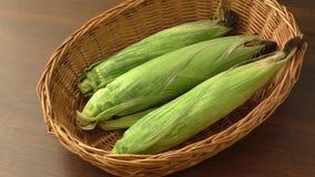 Basse culture de maïs de rendement due à la sécheresse clips vidéos