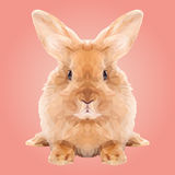 Basse poly conception abstraite de lapin Photos stock