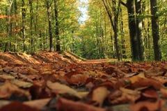 Basse vue sur les feuilles tombées dans la forêt d'automne photos libres de droits
