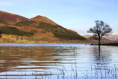 Bassenthwaite jeziora widok Fotografia Royalty Free