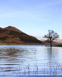 Bassenthwaite jeziora widok Obraz Stock