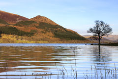 Bassenthwaite Lake View Royalty Free Stock Photography