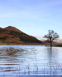 Bassenthwaite Lake View Stock Image
