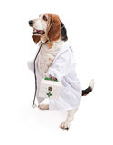 Basset de Hond van de Hond kleedde zich als Dierenarts royalty-vrije stock afbeelding