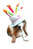 Basset in the funny Hat Royalty Free Stock Image
