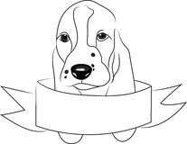 Basset Head Royalty Free Stock Images