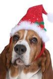 Basset Hond die een hoed van de Kerstman draagt stock foto's