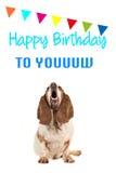 Basset hond die omhooggaande en zingende tekst gelukkige verjaardag aan u kijken op een verjaardagskaart Royalty-vrije Stock Afbeelding