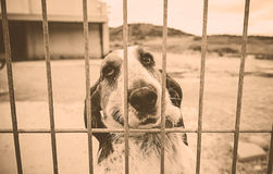 Basset hound abandoned Stock Photography