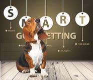 Basset hound. Hound dog looking up white pets paw stock photos