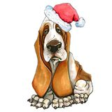 A basset hound breed dog in a Christmas hat. Cute Christmas puppy. Santa Claus. Isolated royalty free illustration