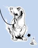 Basset hound dog Stock Image