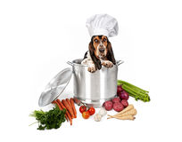 Basset Hound Dog in Big Cooking Pot. Basset Hound dog wearing a chef hat sitting in a big cooking pot with vegetables surrounding it. Isolated on white stock photo