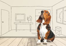 Basset Hound. Hound Dog Looking Up White Pets Paw royalty free stock photos