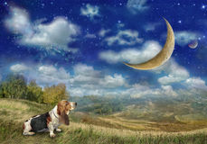 The Basset Hound dog looks at the big moon stock photo