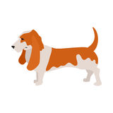 Basset hound dog Royalty Free Stock Photos