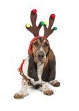 Basset Hound Dog Reindeer Royalty Free Stock Photography