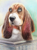 Basset hound dog. Sitting in a basket vector illustration